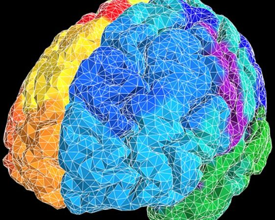 The Search for Secrets of the Human Brain