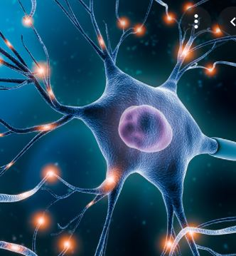 A Single Neuron is a Computer a New Study Finds